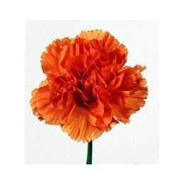 Clavel Nacional Extra Naranja